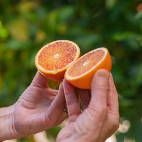 Registration is now open for the 2021 California Citrus Conference